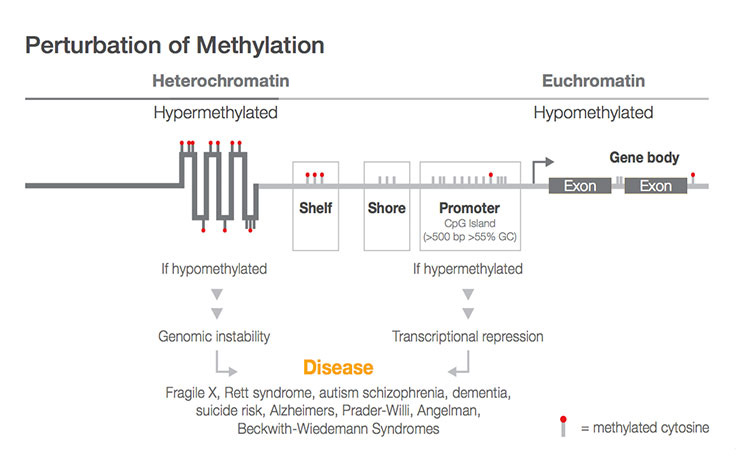 Whole Genome Methylation Coverage